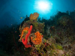 Little Cayman Group Trip August 2014