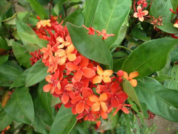 Fiji Taveuni Matangi 2006