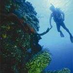 Travel to Little Cayman with A-1 Scuba