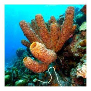 Diver Specialties